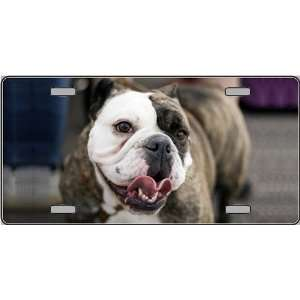 Dog Pet Novelty License Plates auto vehicle car